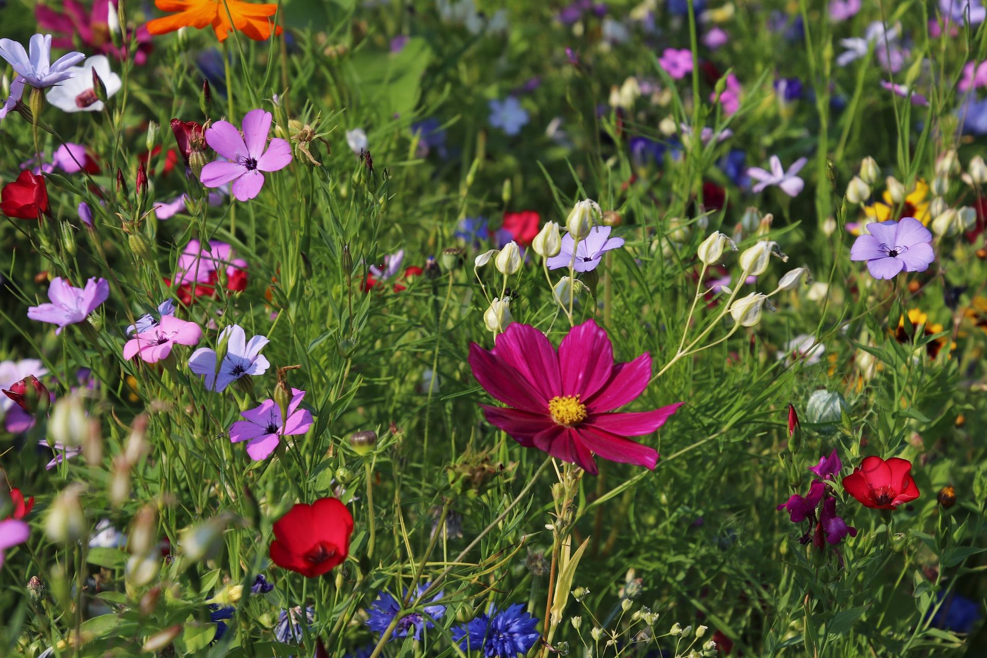 L'importance d'un beau jardin