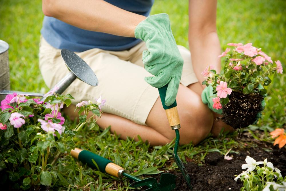 Des plantes magnifiques dans votre jardin