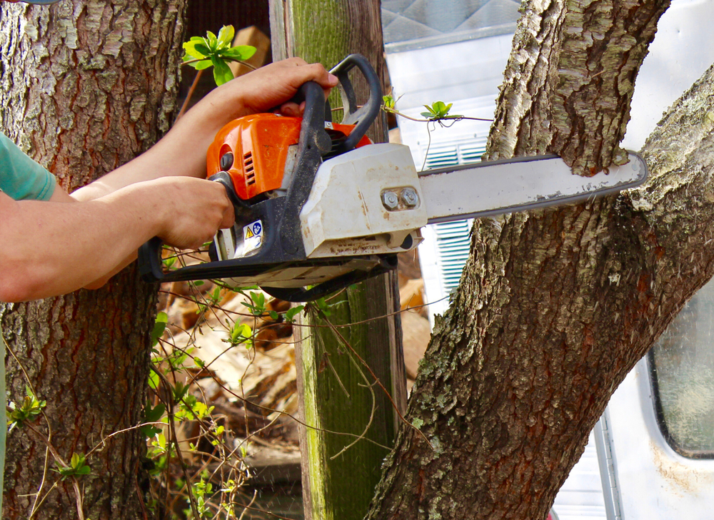Pourquoi faut-il tailler les arbres dans son jardin ?