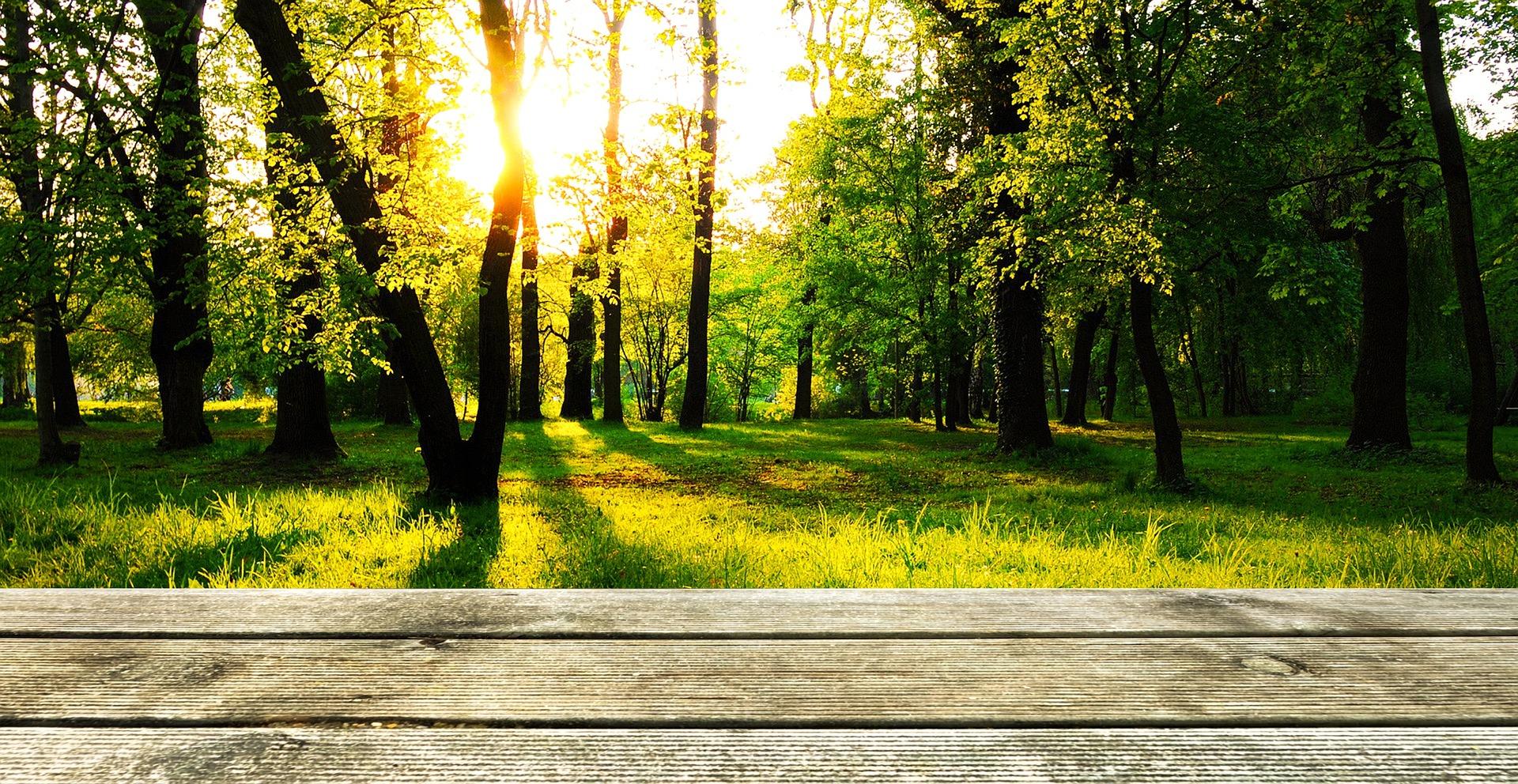 Pourquoi faire installer une terrasse en bois ?